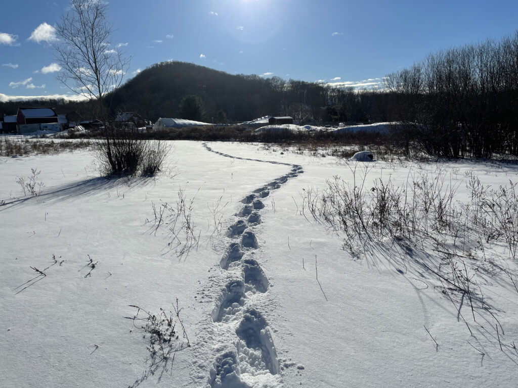 Snowshowing across the landscape